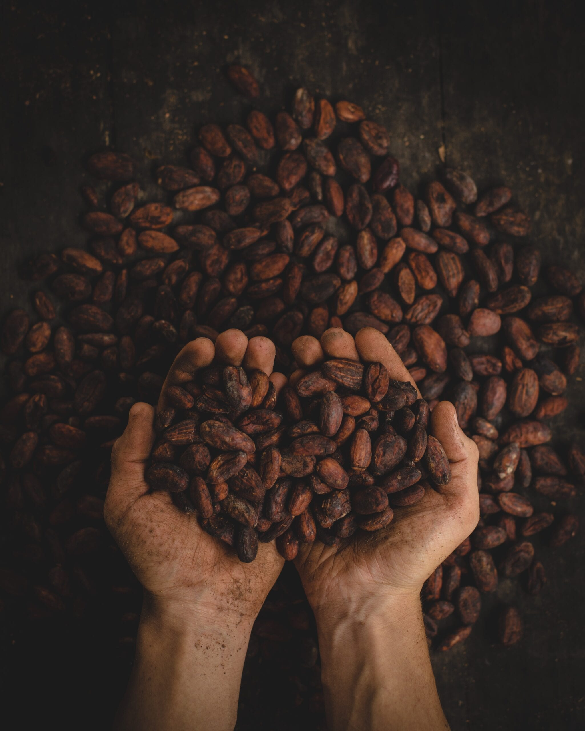 Kakao bönor chokladfontän
